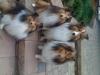 rupp_pups