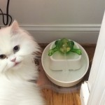 cat.fountain
