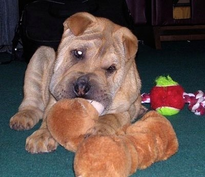 Articles archives page 10 of 12 pet sitting and dog walking in is your pooch able to eviscerate a stuffed animal or other dog toy in under an hour then you may own a dog toy shredder solutioingenieria Image collections