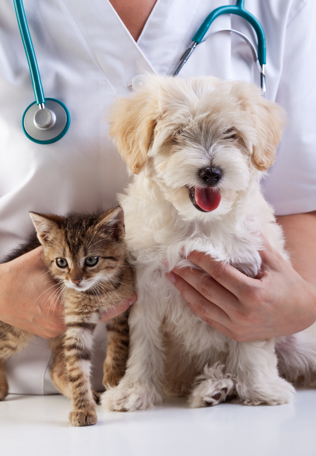Your Pet Might Have Ringworm If.... - Pet Sitting and Dog ...