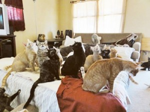 Cats in bedroom.