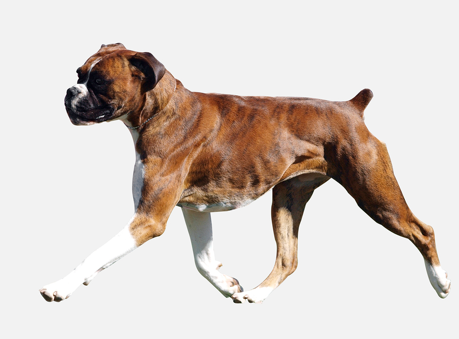 Dog Gone It! Where is MY Tail? - Pet Sitting and Dog Walking