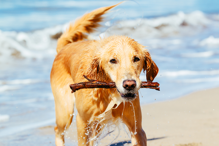 Can Fido Run Free at the Ocean? - Pet Sitting and Dog ...