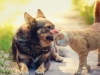 dogcatcare1 (1)